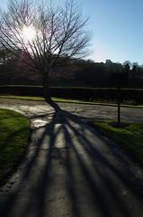 Tree @ Crookes Valley Park, Sheffield