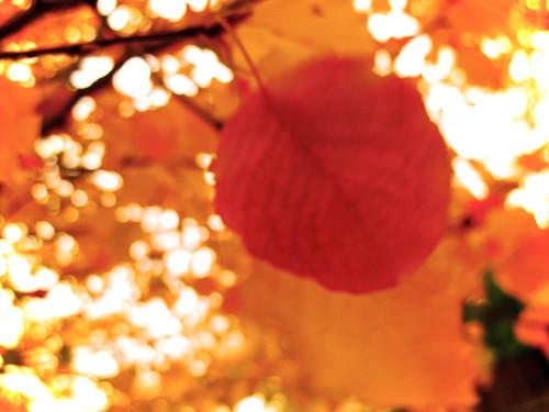 Leafy Blur