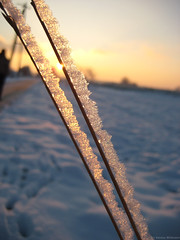 Golden Snow (Axxolotl) Tags: schnee winter light snow cold macro nature closeup germany season deutschland golden licht frost sonnenuntergang sundown natur makro kalt nahaufnahme badenwrttemberg badenwuerttemberg aichwald