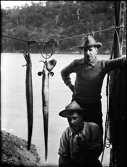 Two workmen holding up two eels (Powerhouse Museum Collection) Tags: blackandwhite food lake fish water hat vintage river dead fishing fishermen hats lagoon rope moustache catch pioneer eels unagi powerhousemuseum gutted xmlns:dc=httppurlorgdcelements11 dc:identifier=httpwwwpowerhousemuseumcomcollectiondatabaseirn385719