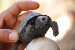 Baby Tortoise and Egg