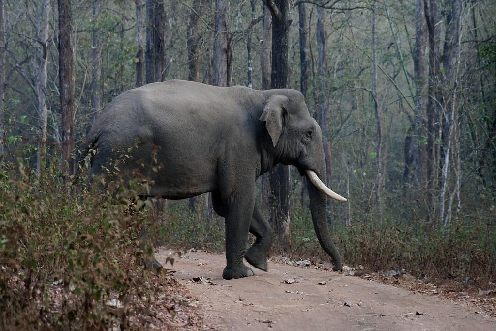 Elephant's pride walk