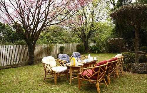 櫻花樹下的早餐