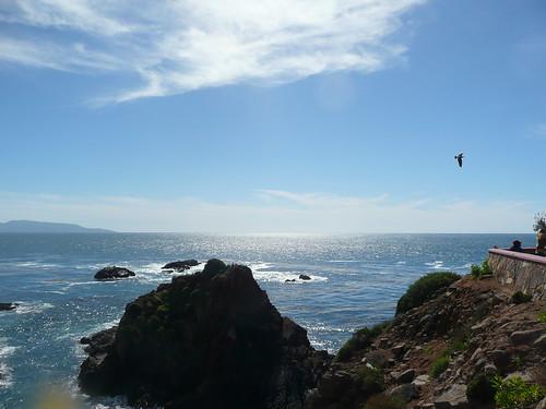 bird flying away.