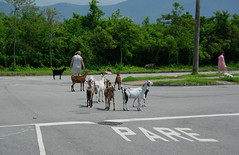 Carnaval de rua: Bode, cabras, cabritos, cachorros e gente.