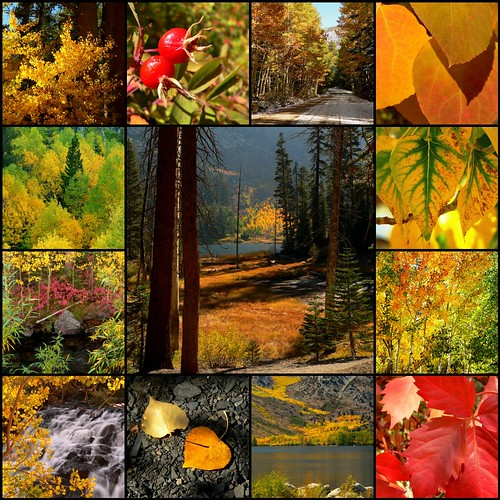 Eastern Sierra Fall Color Group