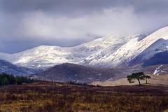 Black Mount, Scotland (tigrić) Tags: uk light mountain snow tree grass clouds landscape scotland unitedkingdom hills munro blackmount coth5