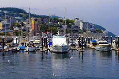 Atami marine