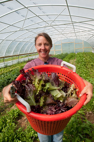 Amy's Organic Garden in Charles City, VA, on Thursday, May 5, 2011. Owner Amy Hicks harvesting greens at her farm.