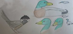 6.8.11 Sketchbook Page