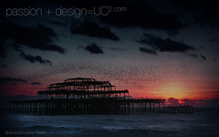 Brighton_Pier_and_Starlings_1960x600.jpg (imjustcreative) Tags: sunset wallpaper beach landscape photography brighton coastal desktoppicture desktoppictures starlings brightonpier flockofbirds desktopphoto desktopphotos wallpaperiphotoedited