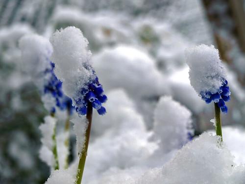 Spring @ Brxl ¬ 3259795