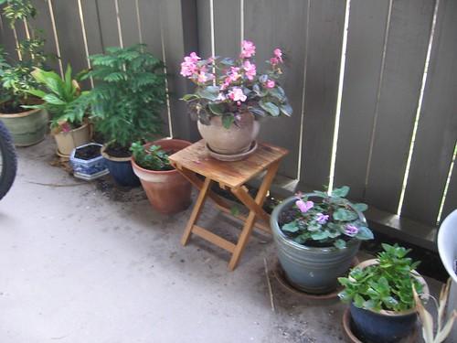 The back porch, april 08