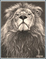 'Head of the Family' - Lion - Fine Art Pencil Drawings  www.drawntonature.co.uk (kjhayler) Tags: portrait blackandwhite art nature proud pencil cat portraits print sketch photo artwork artist natural image leo lion picture illustrations drawings images naturalhistory bigcat photograph lions prints sketches leos bigcats predators animalart wildcats wildanimals animalprints lionphotos lionphoto pencildrawings wildlifeimages drawingpictures animalpictures wildlifeart animalscats africanwildlife africananimals wildlifephotography wildlifephotos animalphotos animaldrawings wildlifeartists pencilsketches malelions wildlifeportraits wildpictures wildlifepictures animalspictures animalslions lionpictures picturesoflions openedition wildlifeartist wildlifedrawings drawingphotographs kevinhayler lionspictures lionprints lionimages pictureslions
