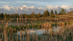 cattail pond & Mission Mountains