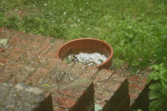 hail in a flower pot