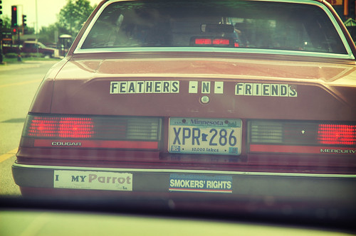 Feathers -N- Friends