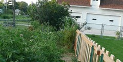 Heirloom jungle (kwill1229) Tags: plant garden tomato vegetable heirloom heirloomtomato