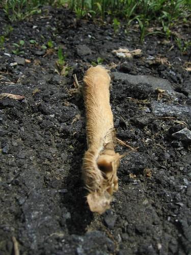Discarded deer leg