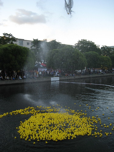 annual duck race - being released