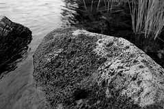 Porous Rock (Zack Mensinger) Tags: camping lake water oregon waves nationalforest canon10d 2008 waldolake willamettenationalforest naturalareas lakesurface