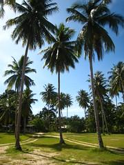 Leaves of three (perceptian design) Tags: ocean vacation beach water thailand island paradise palm palmtree tropical panang