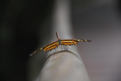 Posing Butterfly!