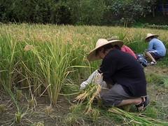 人們透過有機農業體驗活動,重新找回與土地、與糧作的情感,也期許找到台灣農業的明天。
