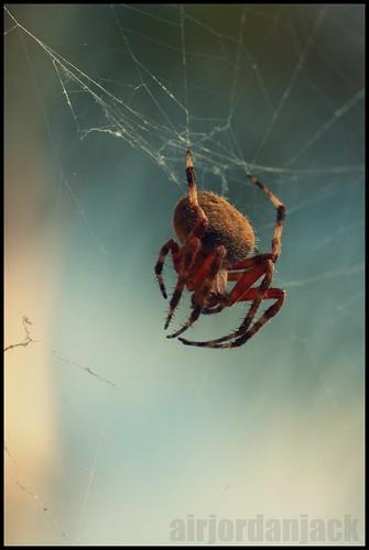 ajj Spiderr