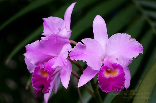 Fauna y flora colombiana yahoo dating