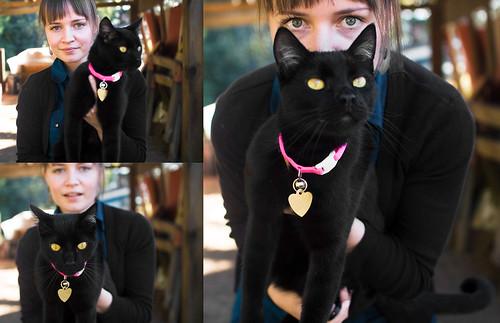 Felix's New Collar