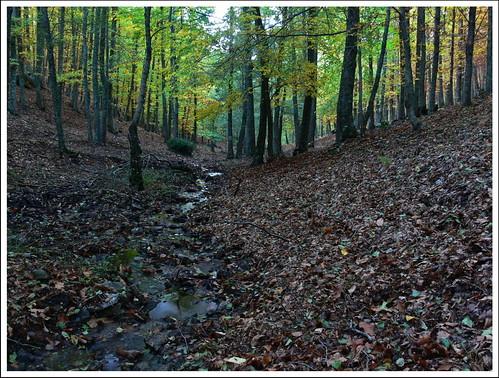 Bosque en otoño.