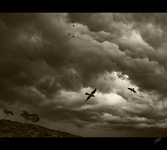 Storm is Coming (NatashaP) Tags: trees sky storm birds sepia clouds nikon grandmother hill explore thumbsup bec naturesfinest bigmomma blueribbonwinner d40 supershot interestingness64 flickrsbest challengeyouwinner anawesomeshot superaplus aplusphoto infinestyle theunforgettablepictures a3b theperfectphotographer pfogold thedantecircle