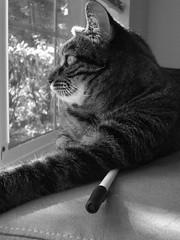 DSC01678 (cadams7216) Tags: cats pets animals kitties