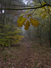 autumn leaves (hoogmoet) Tags: autumn trees fall leaves forest bomen herfst bos bilthoven