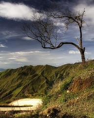 Dead Tree III Color (mercolino) Tags: road sky tree clouds venezuela victoria deadtree valley hdr montain photomatix aragua cruzadas aplusphoto
