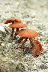 sandy toadstools (dewollewei) Tags: toadstool authumn