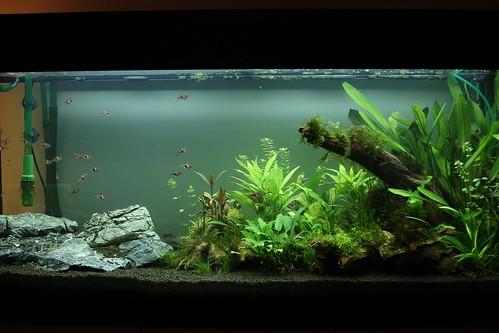 setup the new 240l aquarium a photo on flickriver