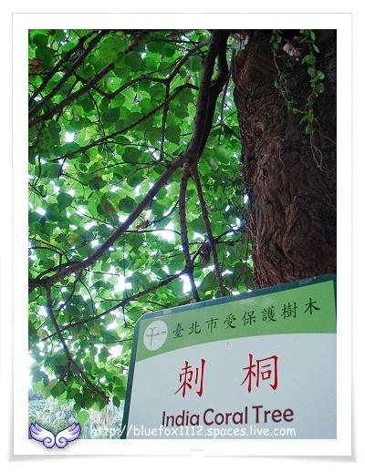 081115溫泉鄉小旅行Ⅱ11_溫泉博物館園區的刺桐