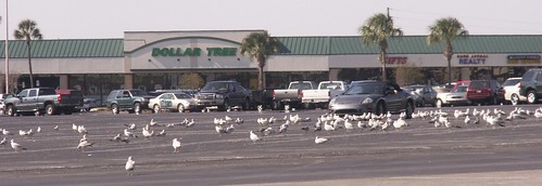 Gull Convention 1