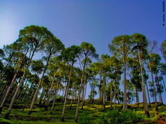 I can Touch the Sky ([ Imran ]) Tags: blue trees pakistan sky green hill perspective foliage jungle murree h5 dsch5 aplusphoto