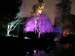 Lights on trees in the Enchanted Woodland, Syon Park, London, November 27, 2008 (carmen_seaby) Tags: park winter london woodland lights wonderland enchanted syon
