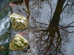 Reflet d'un arbre mort dans un ruisseau glac (Groume) Tags: autumn winter paris tree automne december hiver reflet boisdevincennes reflexion arbre dcembre ruisseaudegravelle