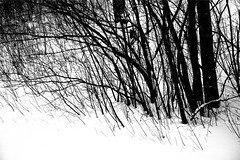 ... (dart1007) Tags: trees blackandwhite bw snow monochrome blackwhite searchthebest gray gimp bn windswept grayscale blancetnoir blueribbonwinner whitershadeofpale frozenrain shadesofgray supershot mywinners canon400d platinumphoto anawesomeshot goldstaraward dragongold awardtree