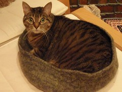 Kitty Pi cat bed