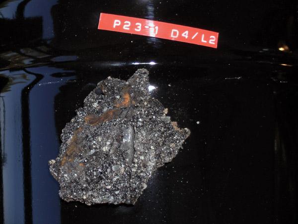 pleistocene oak leaf