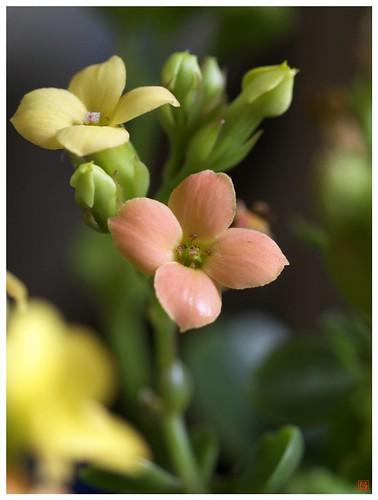 Flowers 081231 #07
