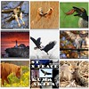 2008 Year In Review (Nikographer [Jon]) Tags: fdsflickrtoys jan january 2008 2009 yearinreview nikographerjon