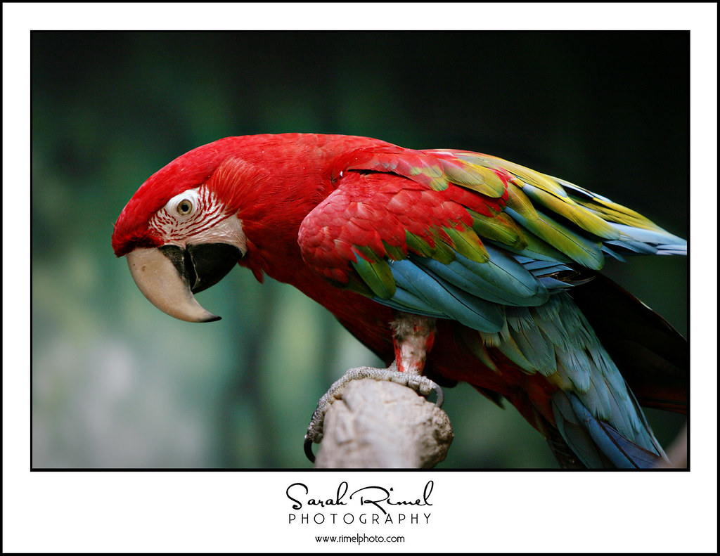 feb zoo 18