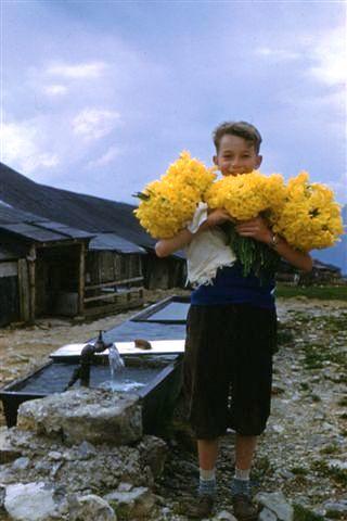 Gros bouquets de Jonquilles (années 50) 003